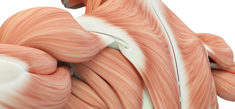 e-Anatomy: Komplettes Nachschlagwerk für menschliche Anatomie - coliquio